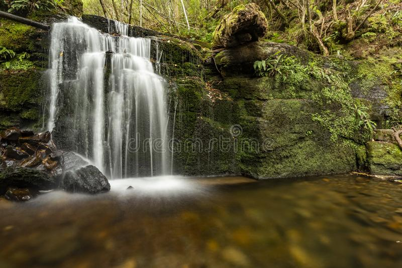 Lush green Waterfall in Tasmania. Lush waterfall deep in Tasmania rain forest royalty free stock images