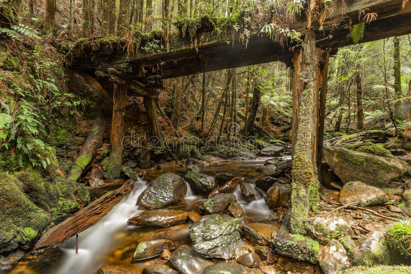 Lush green Waterfall in Tasmania. Lush waterfall deep in Tasmania rain forest royalty free stock photography