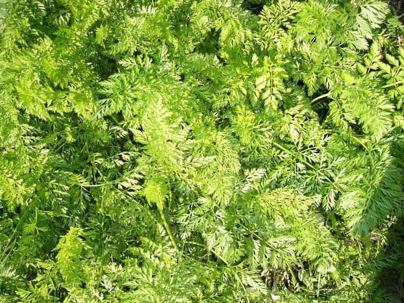 Lush greenery royalty free stock photography
