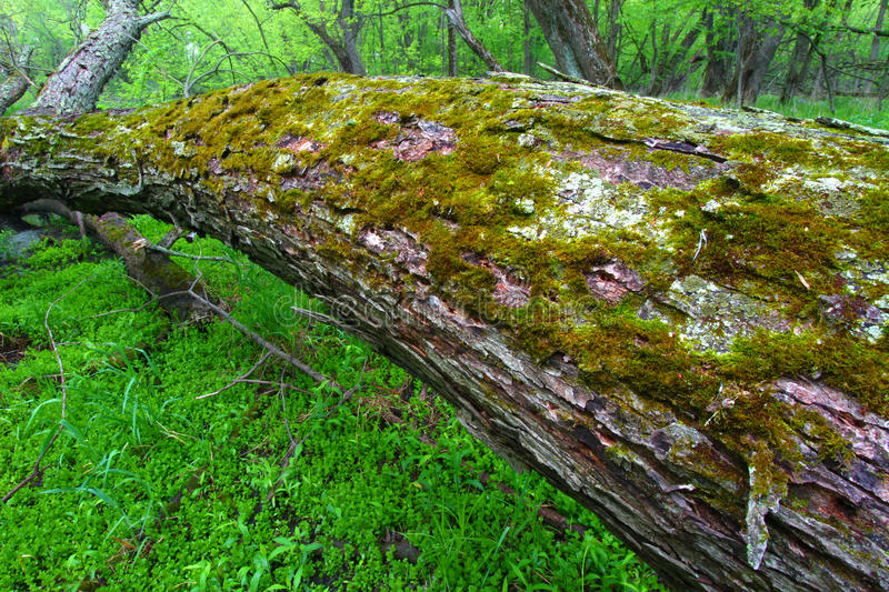 Download Lush Illinois Forest Understory Stock Image - Image: 27398169