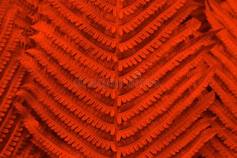 Lush lava tonto fundo natural abstrato foto de stock