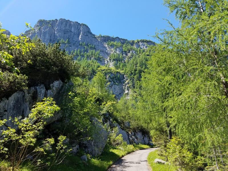 Lush mountain trail royalty free stock photos