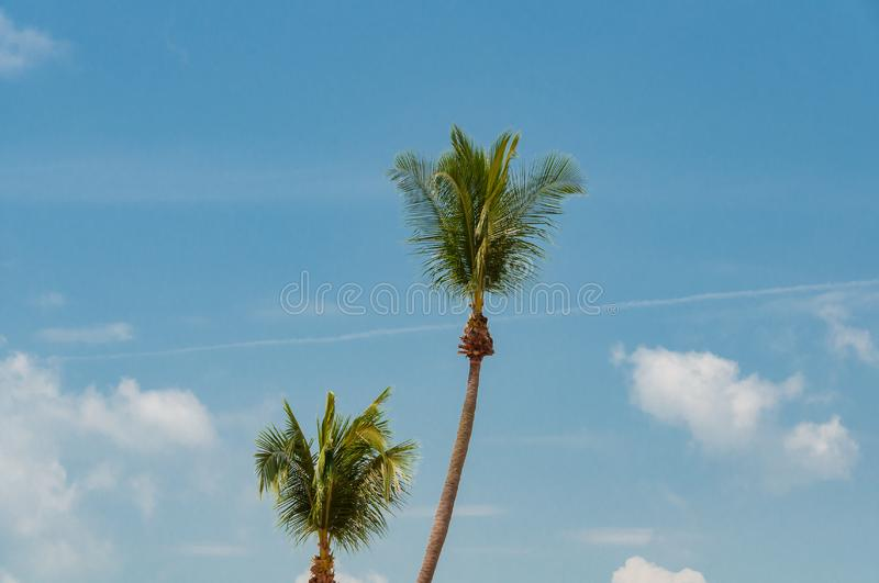 Lush palm trees against blue sky on the background stock photos