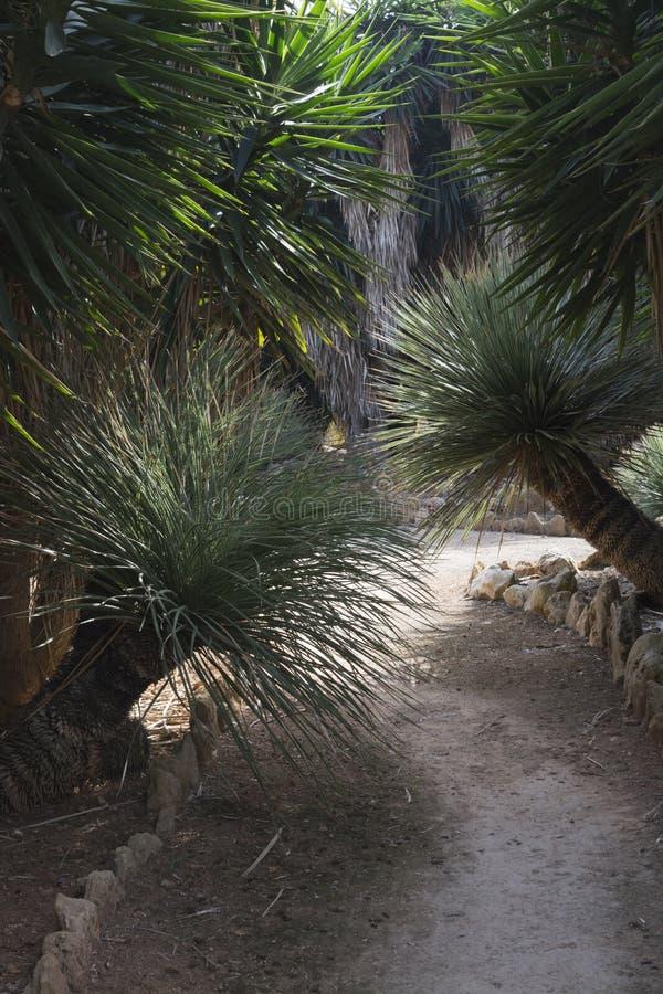 Lush path vertical