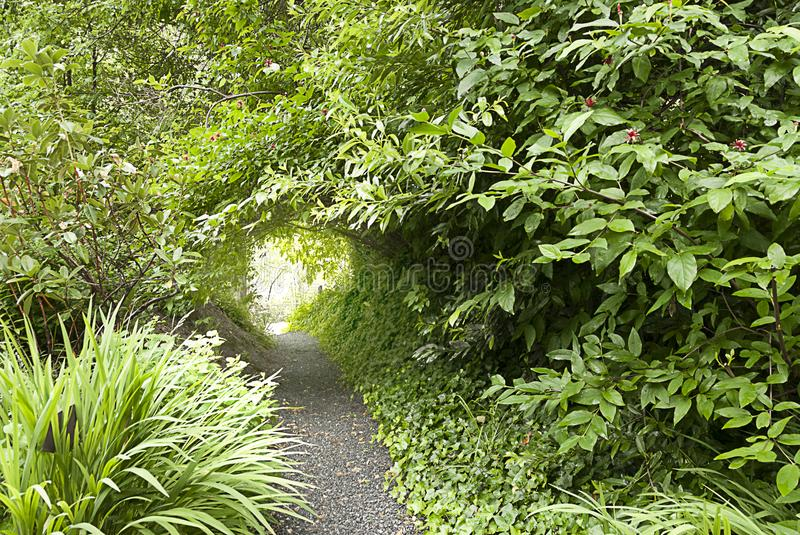 Tunnel of Foliage Covering Path royalty free stock image