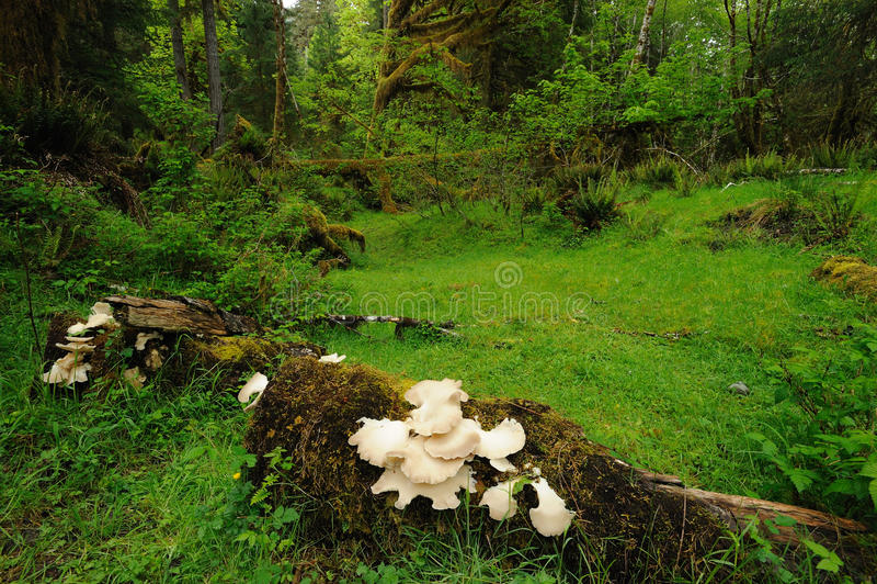 Lush rain forest stock photo