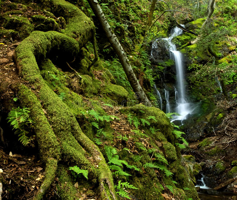 Download Lush Rain Forest Waterfall Royalty Free Stock Image - Image: 19971696