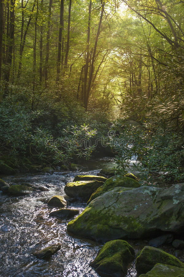Lush river in forest. Of south carolina stock photo