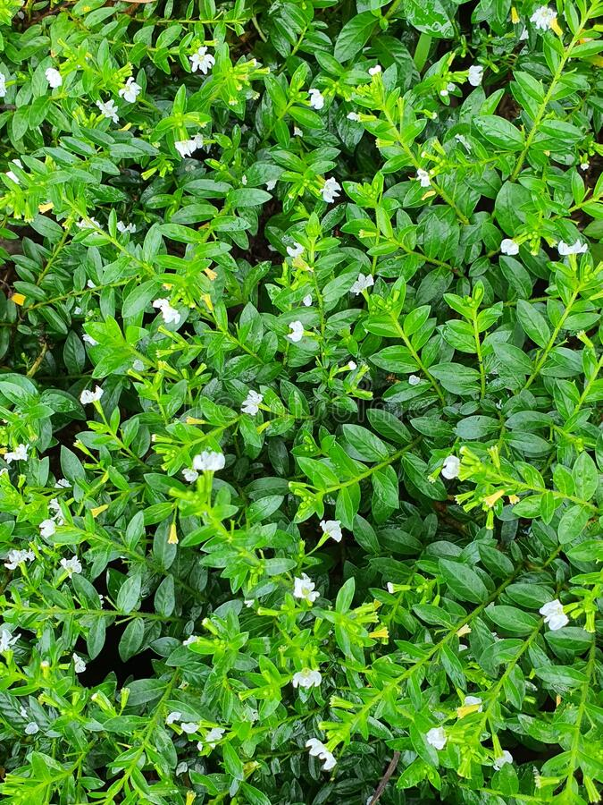 Lush small green plants in the park royalty free stock image