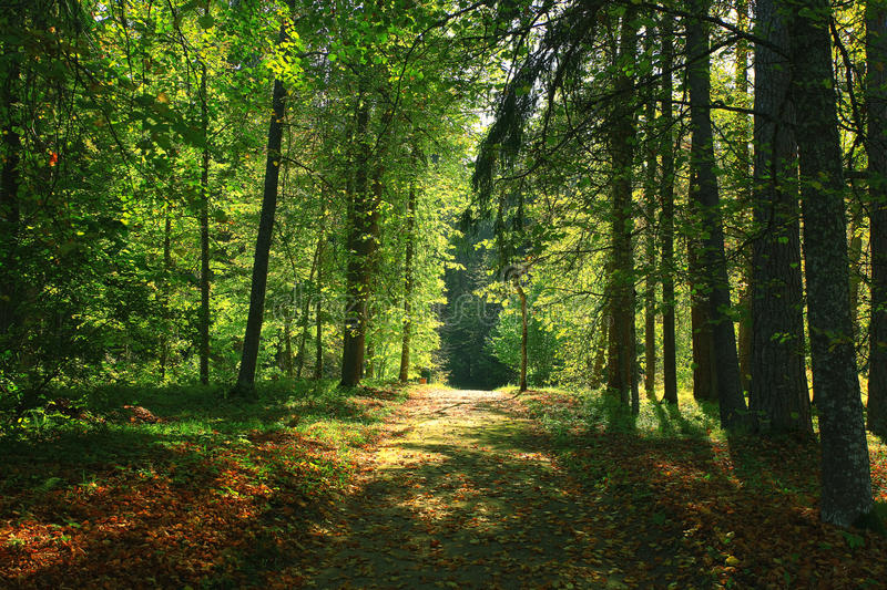 Lush summer forest. Road in the lush summer forest stock images