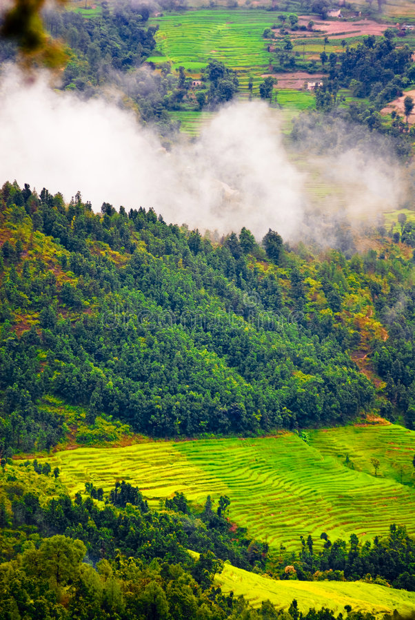 Lush Tibetan landscape stock photo