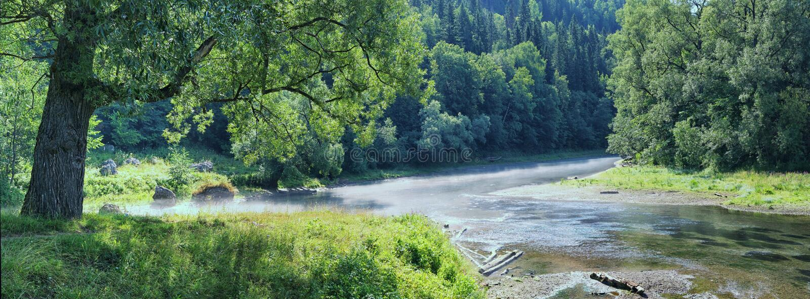 Lush trees on the bank of a shallow river.  royalty free stock photography