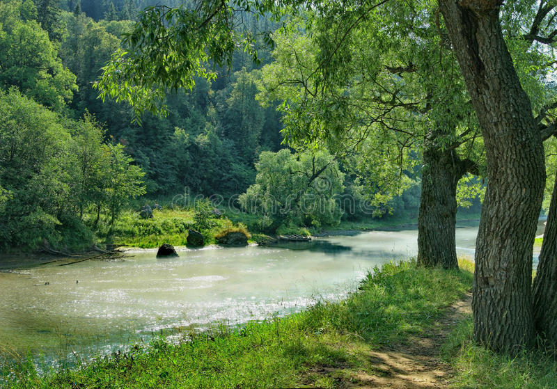 Lush trees on the bank of a shallow river.  royalty free stock photo