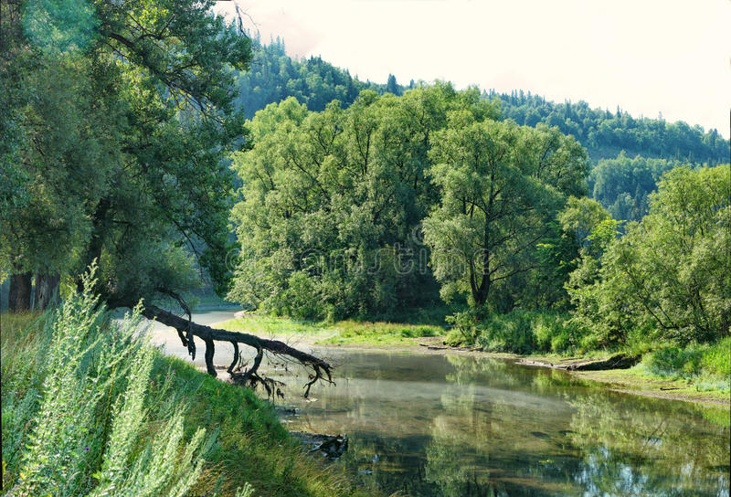 Lush trees on the bank of a shallow river.  stock photo