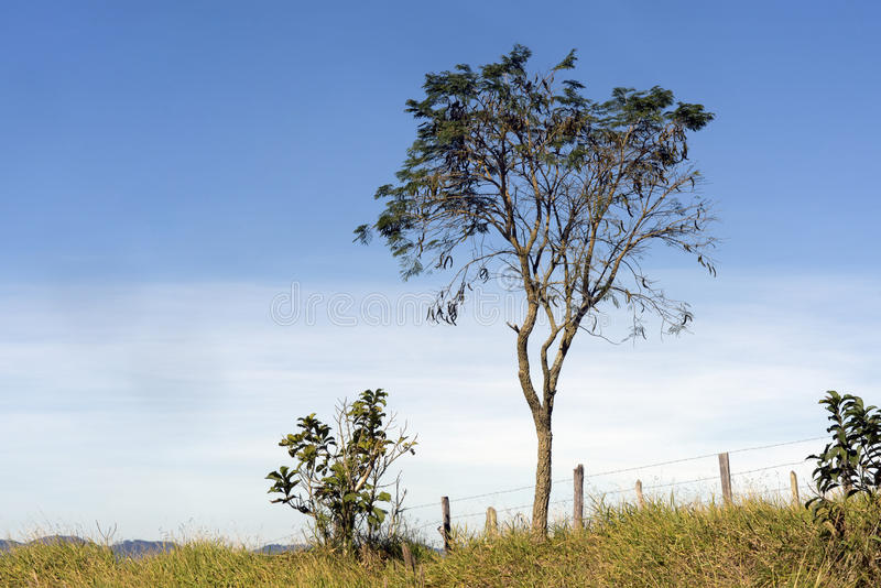 Lush treetop on the hill. TAUBATE, SP, BRAZIL - JULY 2, 2016 - Lush treetop on the hill stock photo