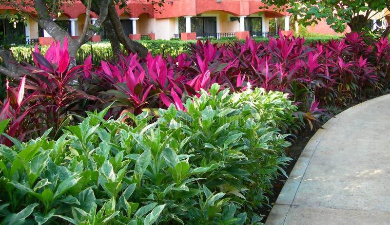 Lush tropical foliage landscape stock photos