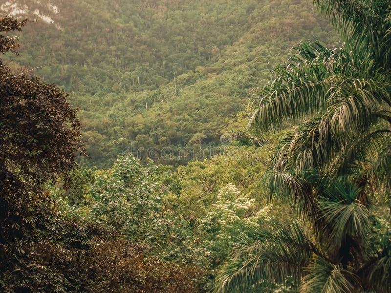 Lush tropical foliage. Roots and luxuriant vegetation in Lomas de Banao, Sancti Spíritus, Cuba. Caribbean stock photo