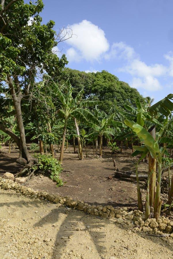 Lush tropical vegetation royalty free stock photo