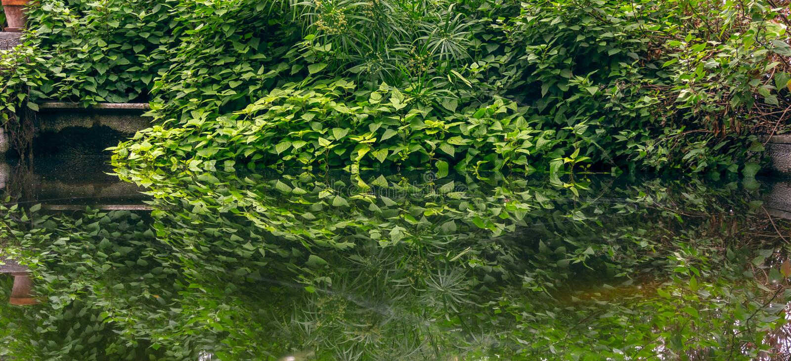 Lush vegatation is reflected on the pond royalty free stock photos