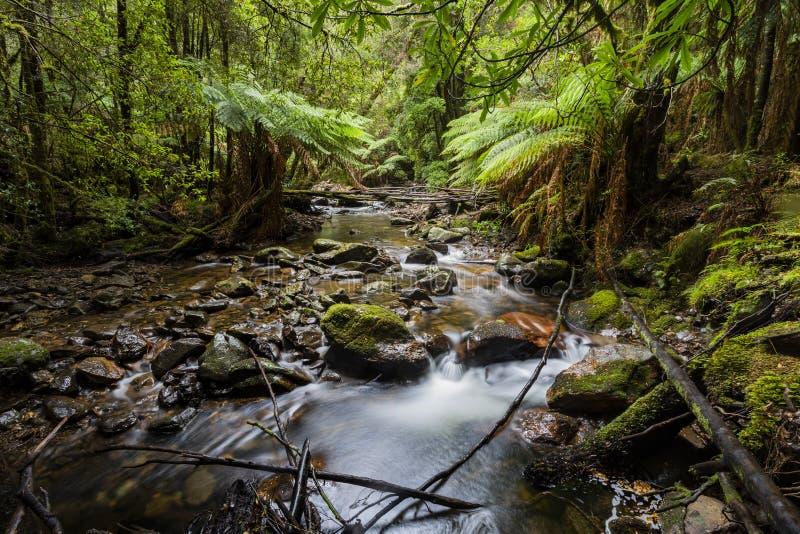 Lush green Waterfall in Tasmania. Lush waterfall deep in Tasmania rain forest royalty free stock photo