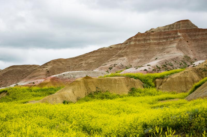 Lush yellow meadows of the Badlands. Yellow meadows laying at the feet of the colorfully striped hills of the Badlands royalty free stock image
