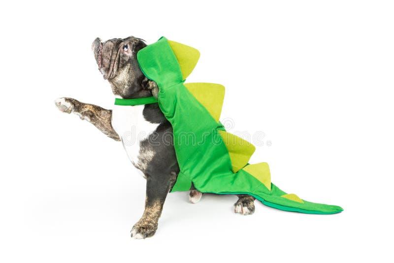 Lustige Bulldogge im Dinosaurier-Kostüm, das Tatze anhebt stockbilder