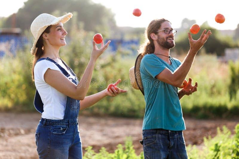 Lustige Gartenkünstlerpaare, die mit frischen Tomaten im Garten jonglieren lizenzfreie stockbilder
