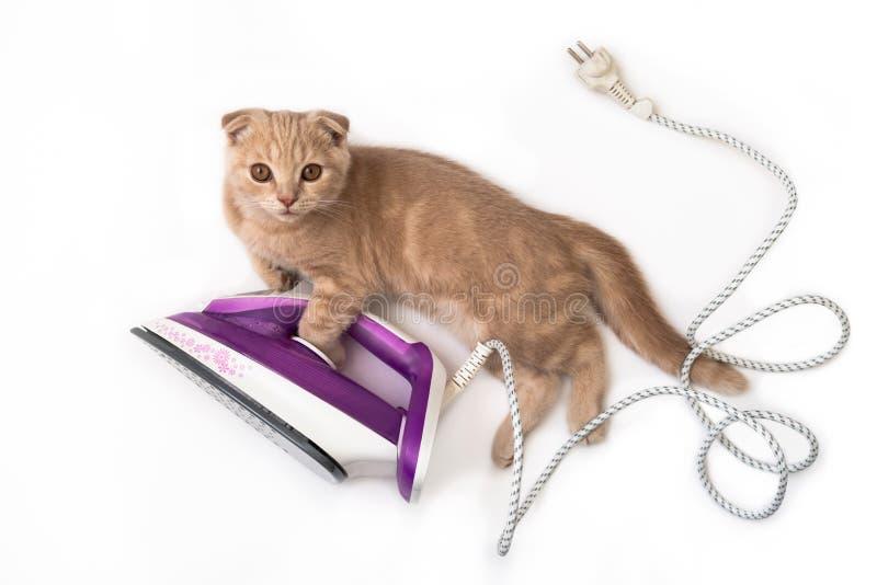 Lustige Katze auf dem elektrischen Eisen, Hausarbeit tuend lokalisiert auf weißem Hintergrund Kreatives Konzept der Feiertagskart lizenzfreies stockbild