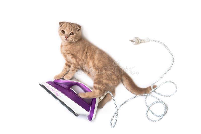 Lustige Katze auf dem elektrischen Eisen, Hausarbeit tuend lokalisiert auf weißem Hintergrund Kreatives Konzept der Feiertagskart stockbilder