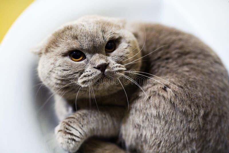 Lustige Katze in der Badezimmerwanne lizenzfreies stockbild
