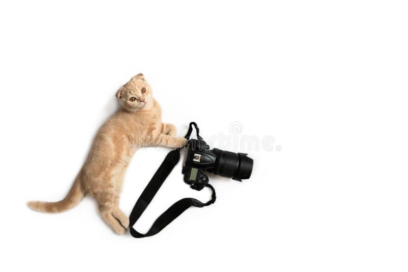 Lustige Katze mit der Kamera lokalisiert auf wei?em Hintergrund Fotografberuf Kreatives Konzept f?r Weltphotographietag, Fahne, lizenzfreies stockfoto