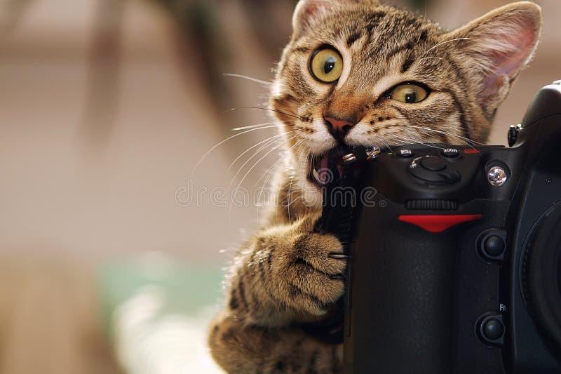 Lustige Katze mit einer Kamera stockfotografie