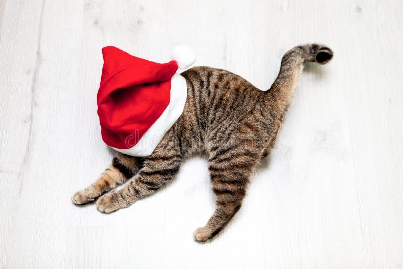 Lustige Katze in Santa Claus-Hut Konzeptweihnachten innen lizenzfreie stockfotografie