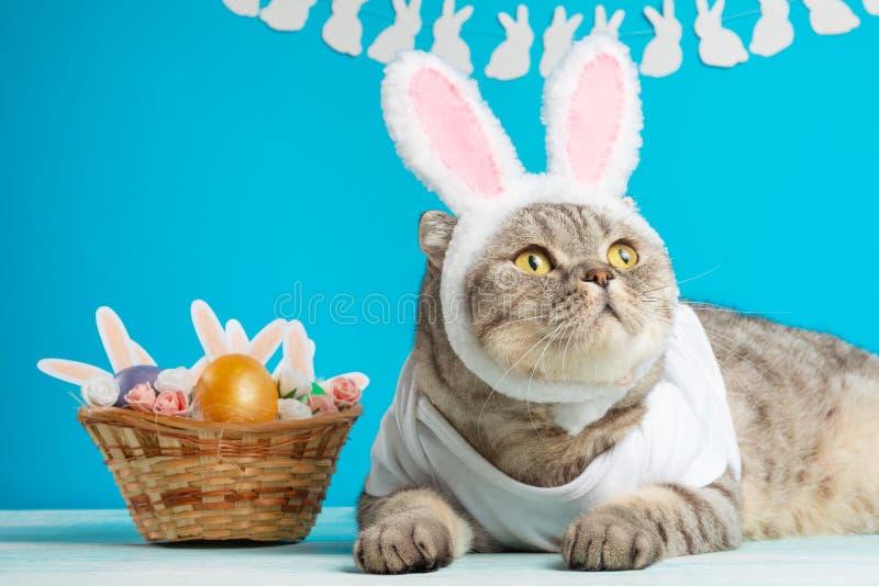 Lustige Osterhasenkatze, nett mit den Ohren und Ostereiern Ostern-Hintergrund und -zusammensetzung lizenzfreies stockfoto