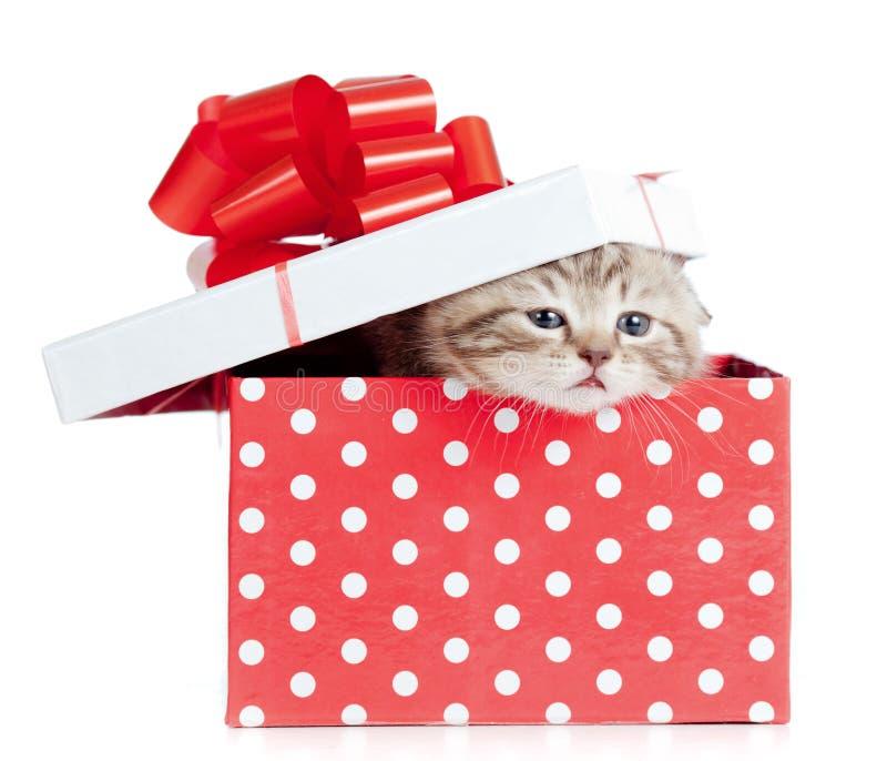 Lustige Schätzchenkatze im roten Geschenkkasten lizenzfreies stockbild