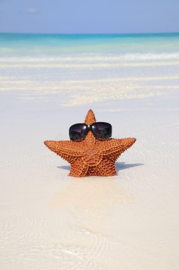 Lustige Starfish mit Sonnenbrillen stockfotos