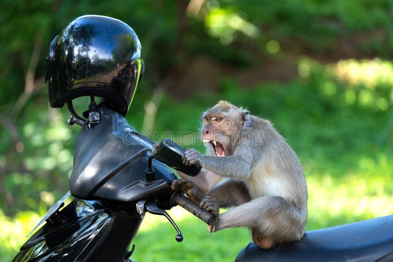 Lustiger Affe Crzay stockfotos