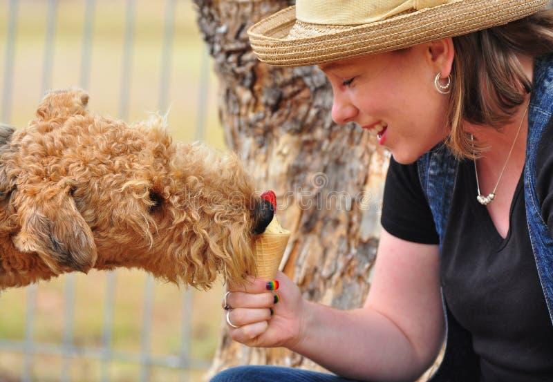 Lustiger Airedalehund, der kalte Erdbeereeiscreme isst stockfotografie
