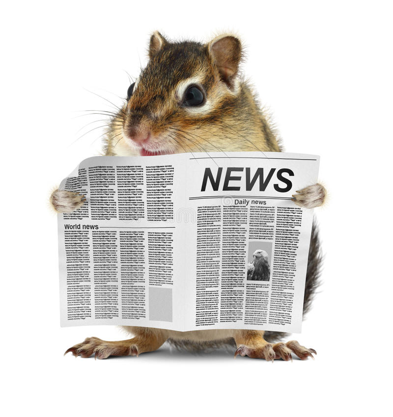 Lustiger Chipmunk las Zeitung stockfotos