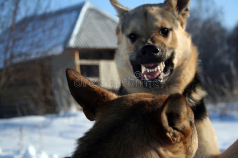 Lustiger elsässischer Hund stockbild
