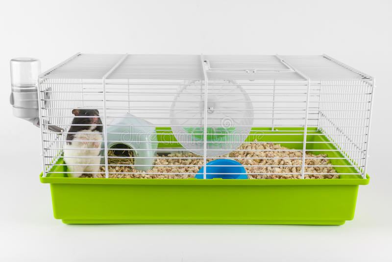 Lustiger Hamster, der aus seinem Käfig auf Weiß heraus schaut stockfotografie