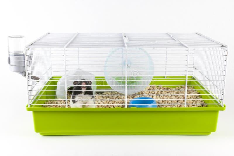 Lustiger Hamster, der aus seinem Käfig auf Weiß heraus schaut stockfoto