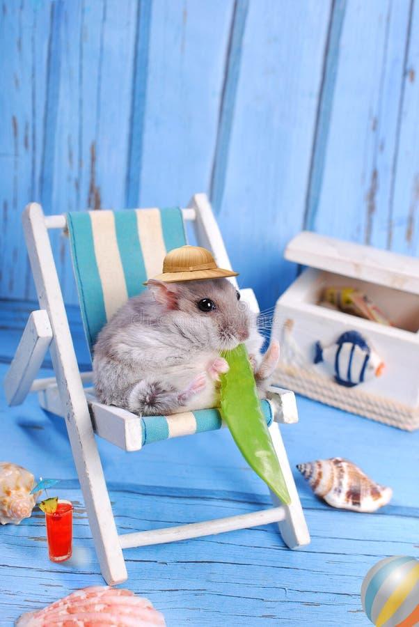 Lustiger Hamster, der an den Sommerferien sich entspannt lizenzfreies stockfoto