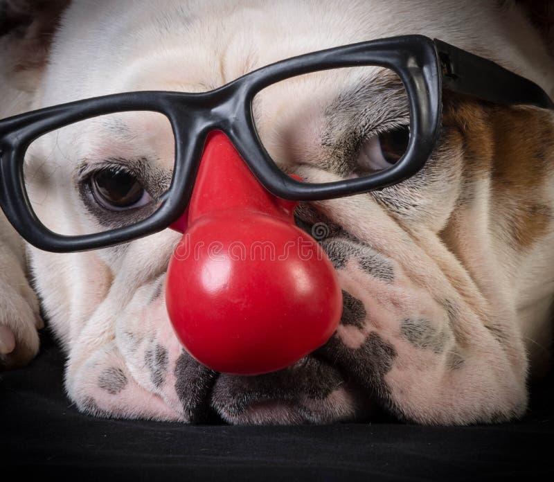 Lustiger Hund stockbilder