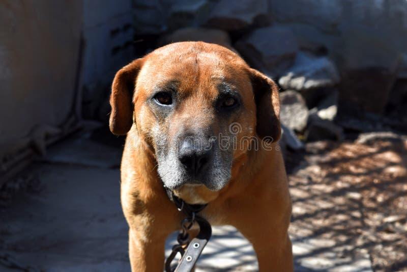 Lustiger Hund Nettes Haustier lizenzfreies stockfoto
