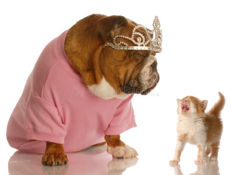 Lustiger Hund und Katzekampf