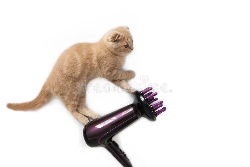 Lustiger Katzenherrenfriseur mit dem Haartrockner, lokalisiert auf weißem Hintergrund Kopieren Sie Platz Kreatives Konzept der Fe lizenzfreies stockfoto