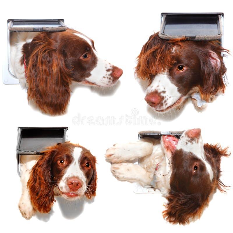 Lustiger Katzenklappenhund lizenzfreies stockfoto