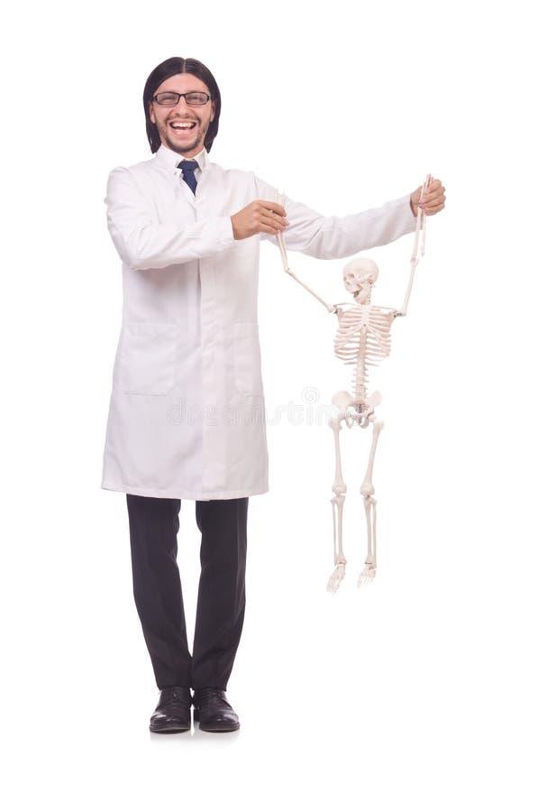 Lustiger Lehrer mit dem Skelett lokalisiert lizenzfreies stockbild