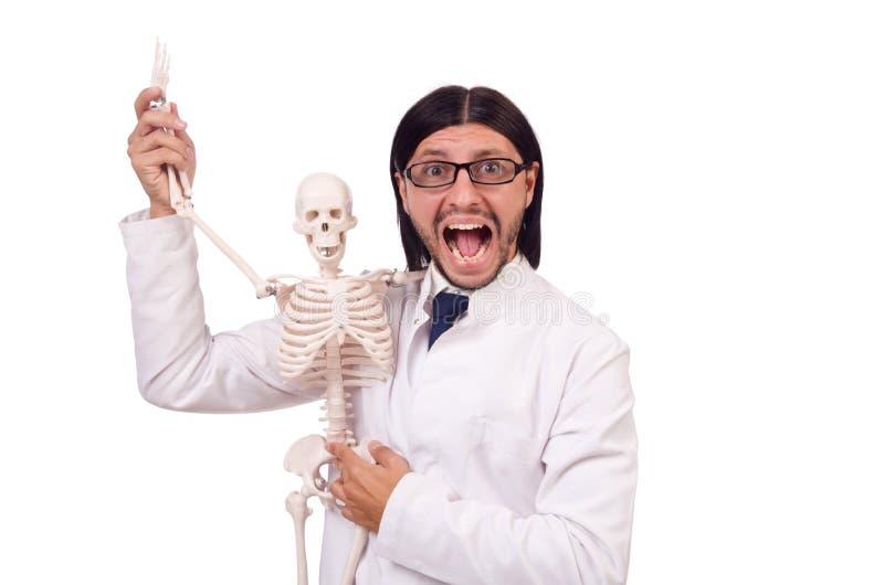 Lustiger Lehrer mit dem Skelett lokalisiert stockfotografie